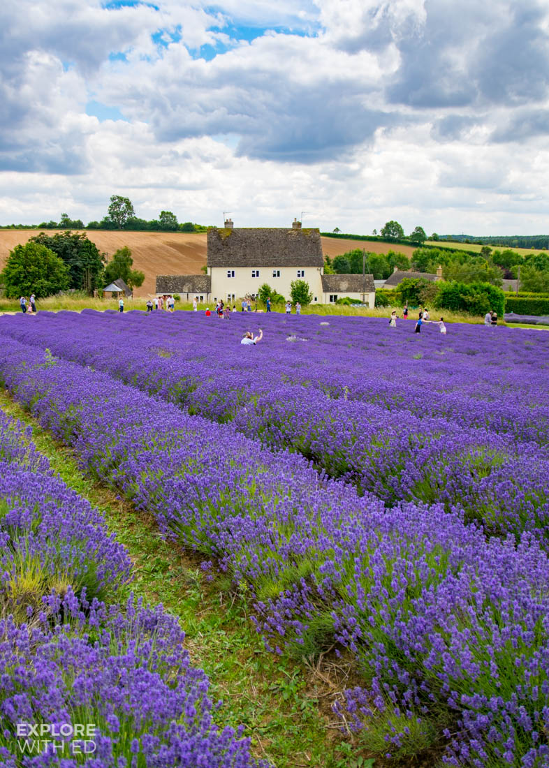 Cotswold Lavender Farm and House