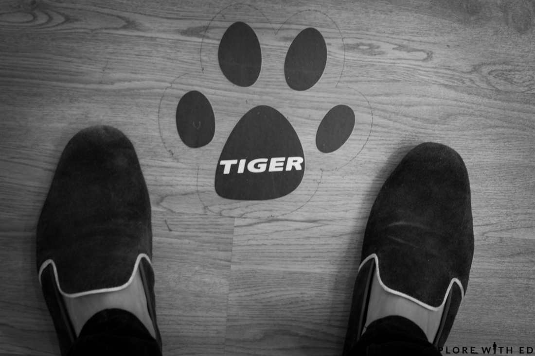 Tiger Stores Logo Cardiff