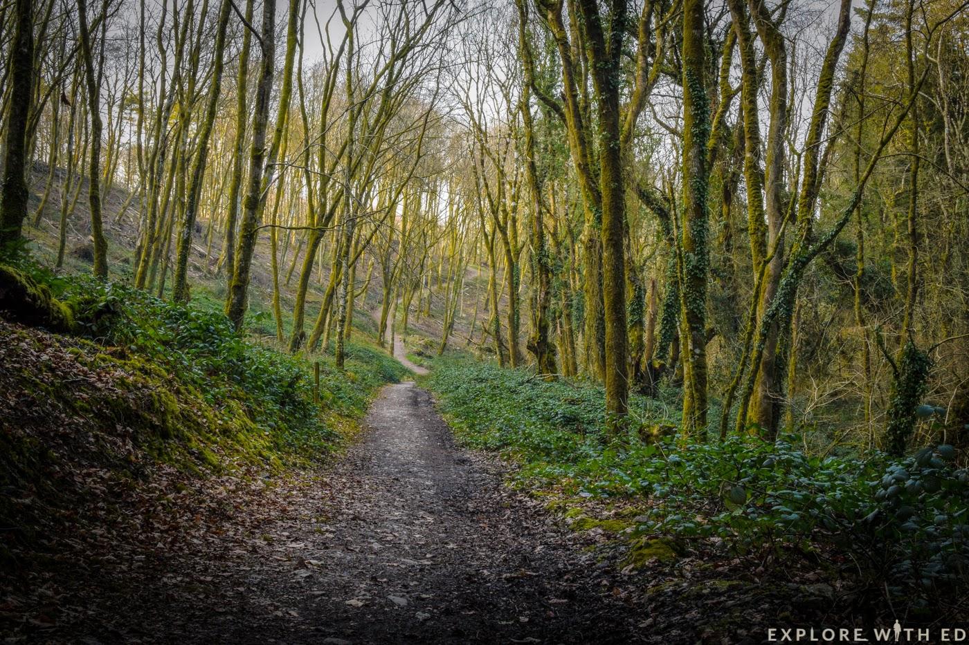 Nature trails at Bluestone Resort in Pembrokeshire