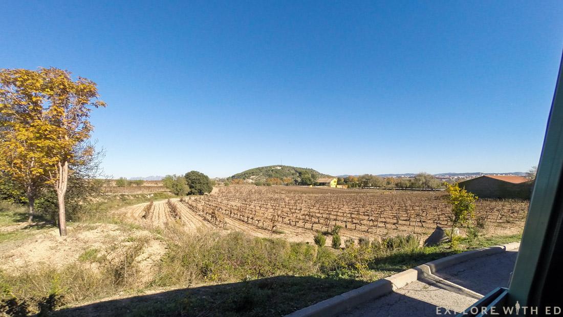 Vineyard, Pacs del Penedès, Torres