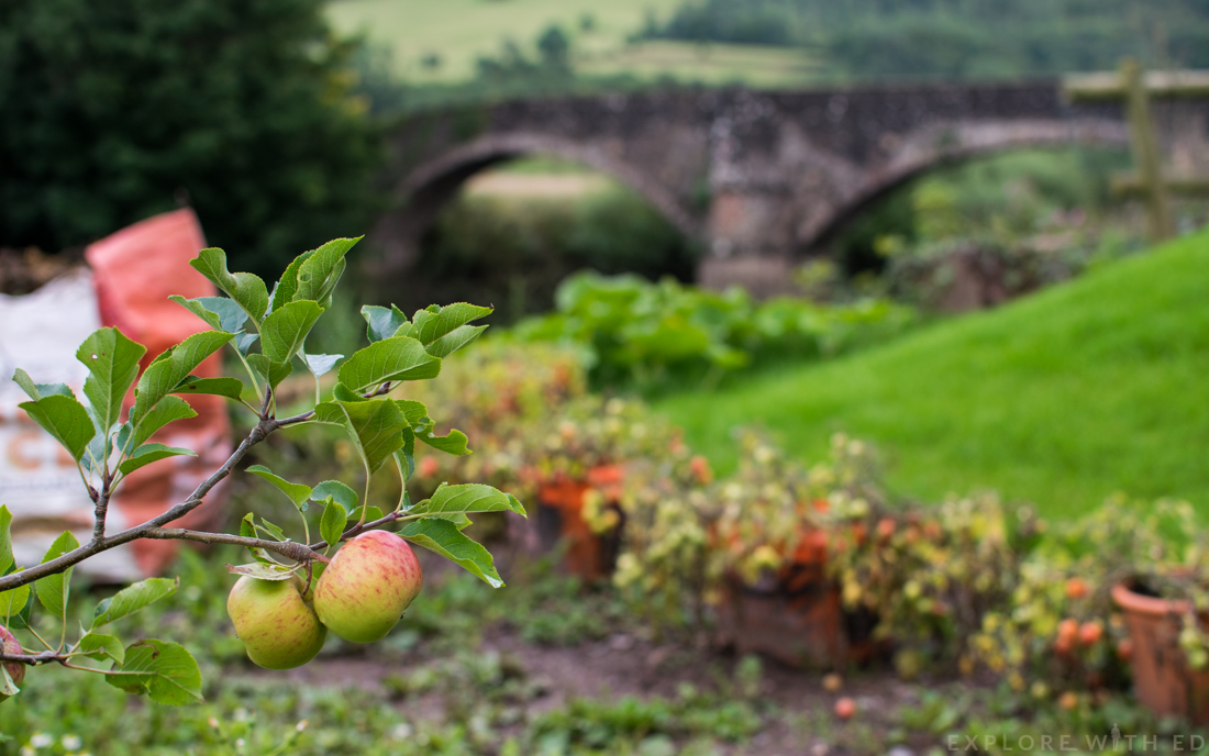 Apple tree, Kitchen Garden, Newbridge on Usk
