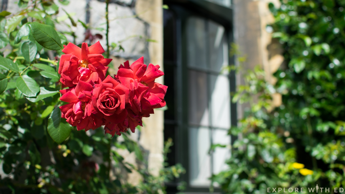 Windsor Castle Tour, Red roses