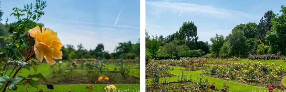 Roath Park Rose Garden
