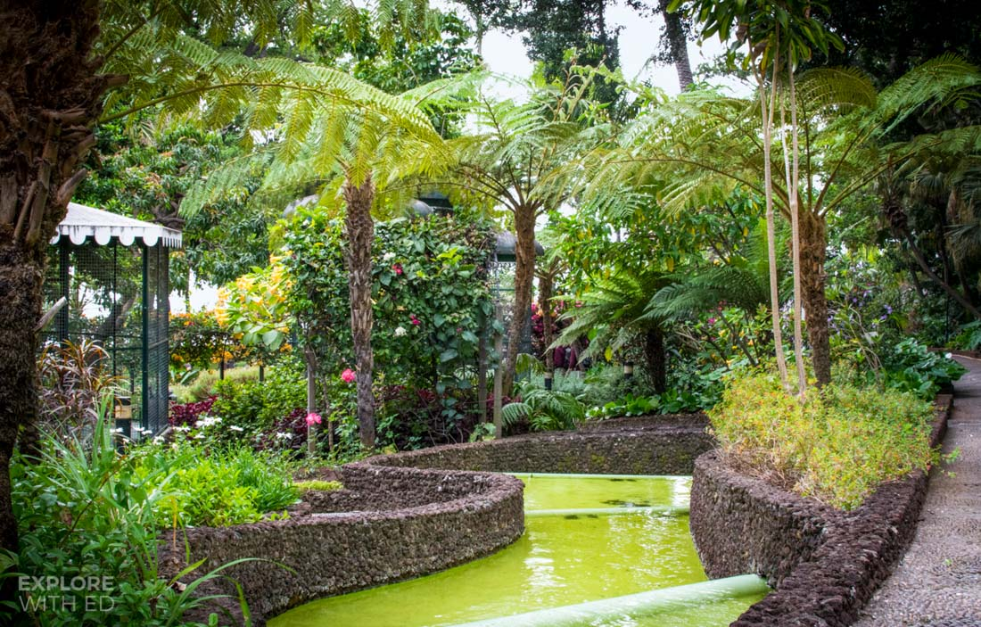 Tropical plants in Funchal Madeira
