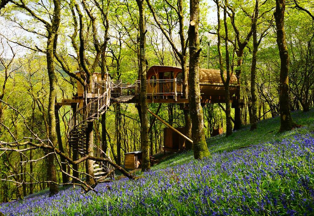Living Room Treehouses in Wales