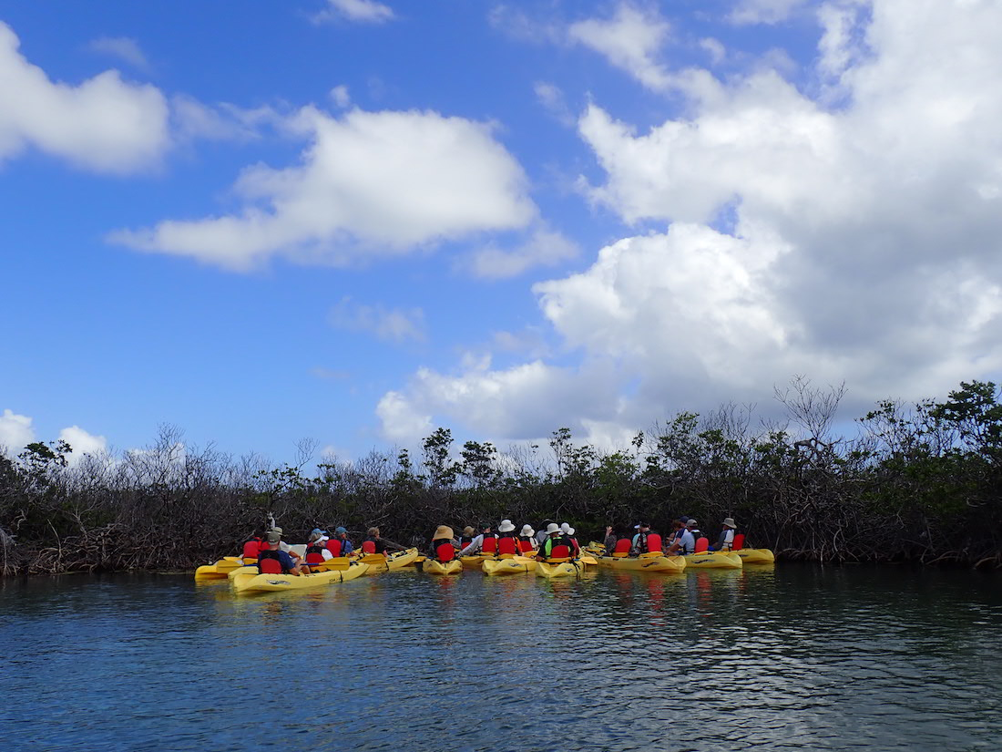 Mangrove Lagoon Kayak in St Thomas by EcoTours