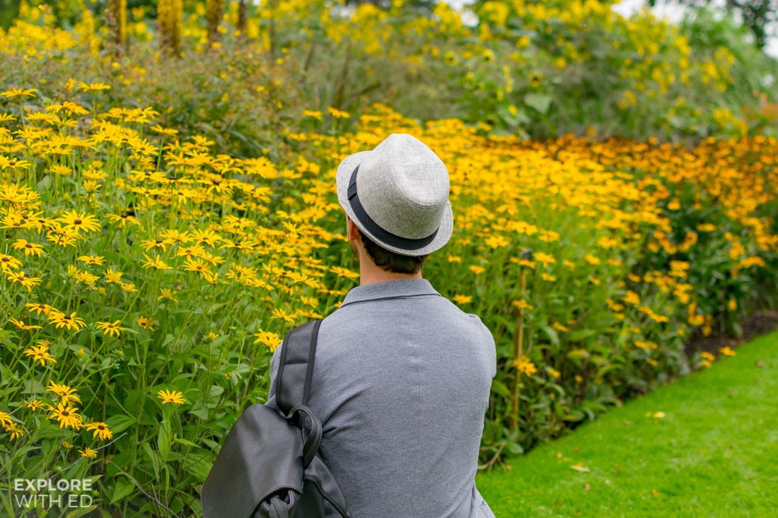Sunshine yellow border plants in Savill Garden