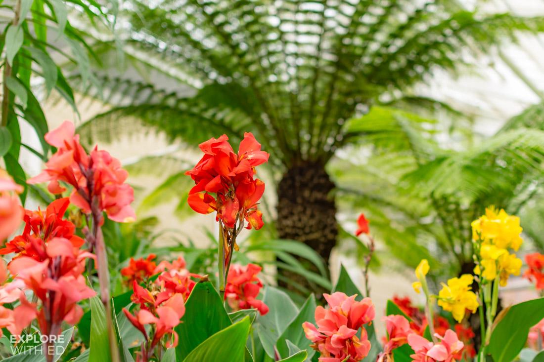 Flowers in the Queen Elizabeth Temperate House in Savill Garden